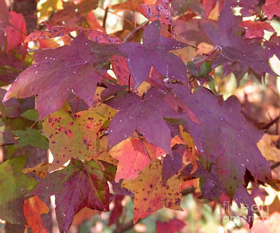 Art Print featuring the photograph Traces Of Fall by Andrea Anderegg
