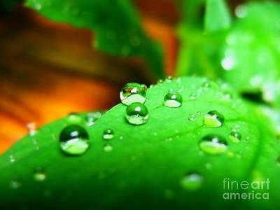 Moisture On Plants Photograph - Traces Of Rain by Patti Whitten