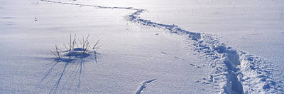 Cold Temperature Photograph - Track On A Snow Covered Landscape by Panoramic Images