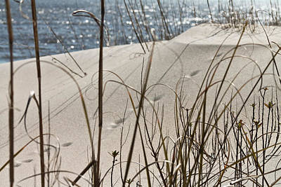 Photograph - Tracks In The Sand by Jessica Brown