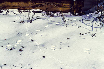 Animal Tracks Digital Art - Tracks In The Snow - Natural Abstract by Barry Jones