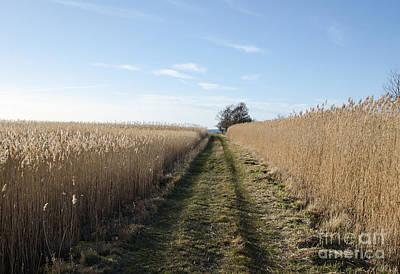 Tracks Through The Reeds Art Print by Kennerth and Birgitta Kullman
