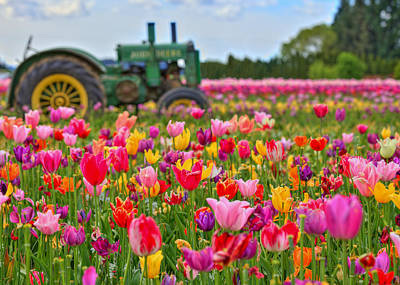 Photograph - Tractor In A Tulip Field by Joseph Bowman