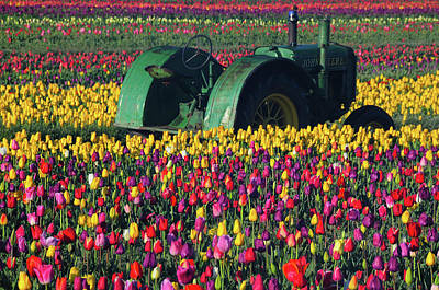 Tractor In The Tulip Field, Tulip Art Print by Michel Hersen