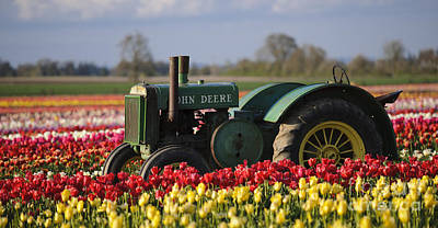 Photograph - Tractor In Tulip Field by John Shaw