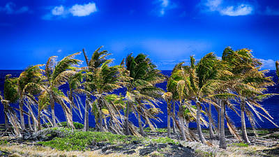 Trade Winds Art Print by Stephen Stookey