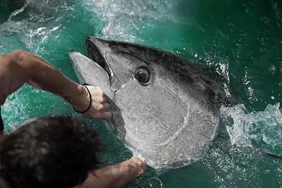Traditional Blue-fin Tuna Fishing Art Print by Louise Murray