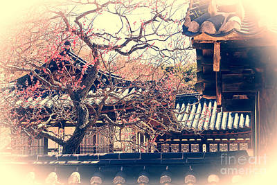 Traditional Korean House With Pink Plum Blossoms Art Print