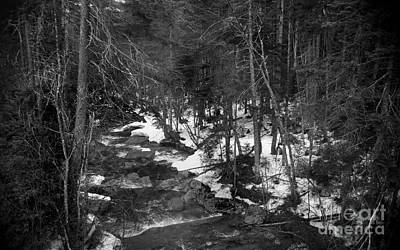 New Hampshire Tours Photograph - Traditional Mountain Stream by Skip Willits