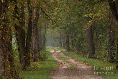 Photograph - Trail Along The Canal by Jeannette Hunt