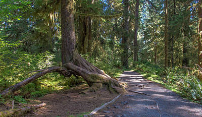 Photograph - Trail For The Afternoon- Ho Rainforest-olympic National Park by Tim Bryan