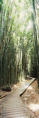 Bamboo Photograph - Trail In A Bamboo Forest, Hana Coast by Panoramic Images