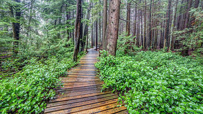 Photograph - Trail In A British Columbia Forest by Pierre Leclerc Photography
