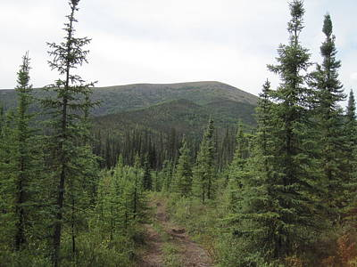 Photograph - Trail In Alaska by Lucinda VanVleck