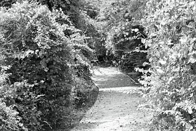 Trail In Black And White Art Print by Carolyn Ricks