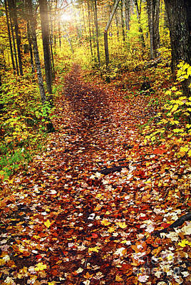 Algonquin Provincial Park Photograph - Trail In Fall Forest by Elena Elisseeva
