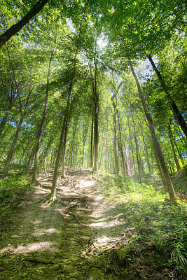 Photograph - Trail In The Forest by Alexey Stiop