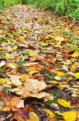 Photograph - Trail Of Leaves by Deb Buchanan