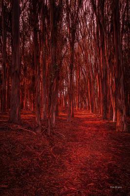Photograph - Trail Of Light...... San Simeon by Tim Bryan