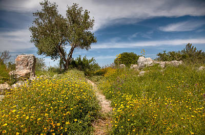 Photograph - Trail Of Spring by Uri Baruch