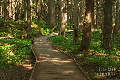 Photograph - Trail Of The Cedars by Charles Kozierok
