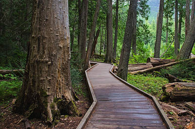 Trail Of The Cedars Art Print