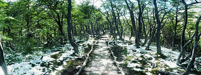 Winter Landscapes Photograph - Trail Through The Trees Of Tierra Del by Panoramic Images