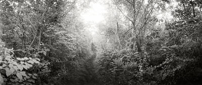 Trail Through The Woods At Fort Tilden Art Print