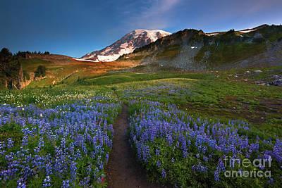 Mt Rainier Wall Art - Photograph - Trail To Majesty by Mike Dawson