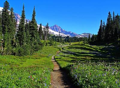 Trail To Mazama Ridge Art Print by Lynn Hopwood