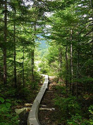Trail To Sandy Stream Pond Art Print
