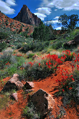 Photograph - Trail To The Watchman by Barbara Manis