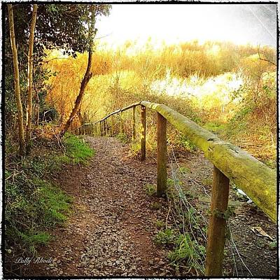Warwickshire Photograph - Trailhead In Hartshill Hayes Country by Polly Rhodes