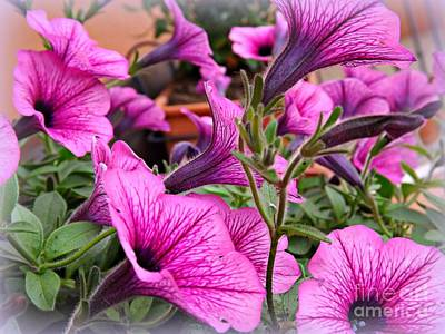 Art Print featuring the photograph Trailing Petunias by Clare Bevan