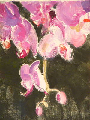 Trailing Phal Art Print by Valerie Lynch