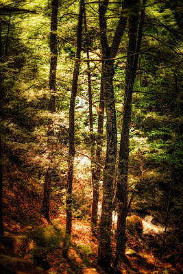 Photograph - Trailside by Robert Clifford