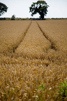 Photograph - Tramlines by Paul Lilley