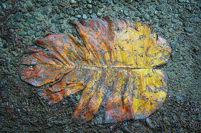 Print featuring the photograph Trampled Leaf by Britt Runyon