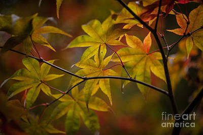 Red Leaves Photograph - Tranquil Collage by Mike Reid
