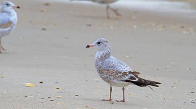 Sea Gull Photograph - Tranquil Day  by Betsy Knapp