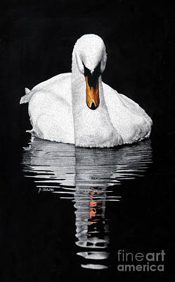 Drawing - Tranquil Reflection by Sheryl Unwin