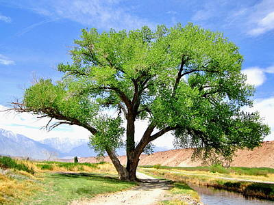 Owens River Photograph - Tranquil Scene by Marilyn Diaz