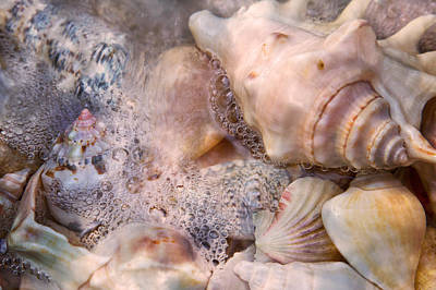 Exhibit Photograph - Tranquil Seashells by Betsy Knapp
