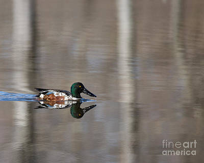 Photograph - Tranquil Shoveler by Dale Nelson