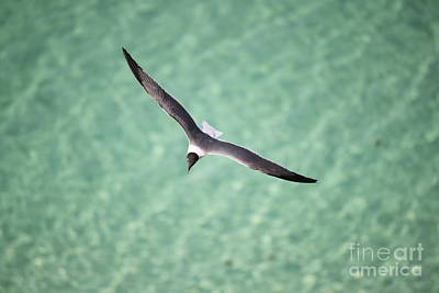 Photograph - Tranquil Soaring by Jennifer E Doll