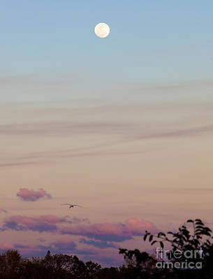 Photograph - Tranquil Twilight by Michelle Constantine