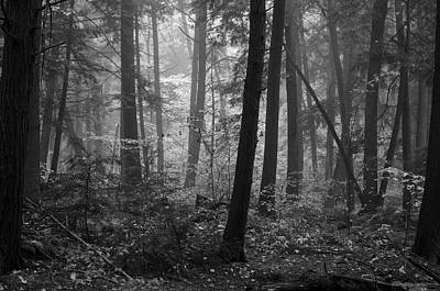 Photograph - Tranquil Woods by Eric Dewar