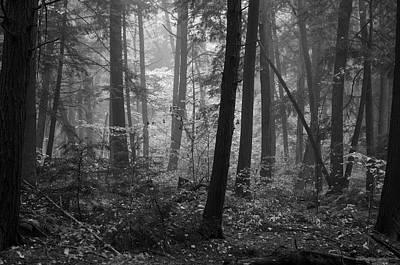 Tranquil Woods Art Print by Eric Dewar
