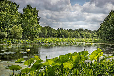Photograph - Tranquility by James Woody