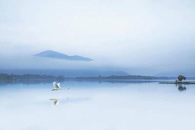 Swan Photograph - Tranquility by Kieran O Mahony